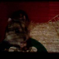Photo de profil de Lilou