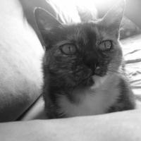 Photo de profil de Canele