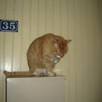 Photo de profil de Gaspar