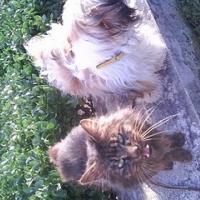 Photo de profil de Tisou
