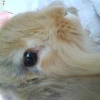 Photo de profil de Mordor