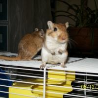 Photo de profil de Lili