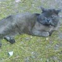 Photo de profil de Timinou