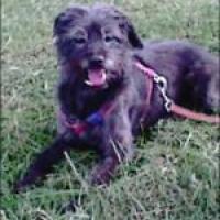 Photo de profil de Laïka