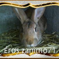 Photo de profil de Éros