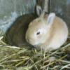 Photo de Mes lapins