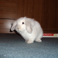 Photo de profil de Plume