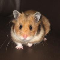 Photo de profil de Pashmina