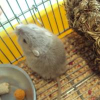 Photo de profil de Cookie