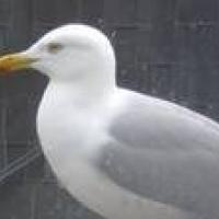 Photo de profil de Gogo