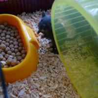 Photo de profil de Gégé la gerbille