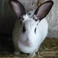 Photo de profil de Jena