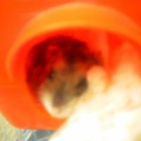 Photo de profil de Gribouille