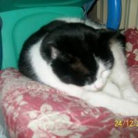 Photo de profil de Minette