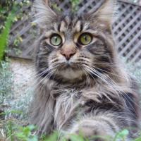 Photo de profil de Calypso la cannelle