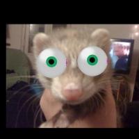 Photo de profil de Django