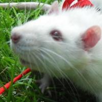 Photo de profil de Splinter