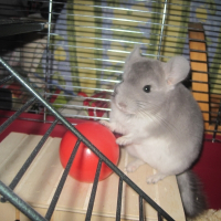 Photo de profil de Shumi