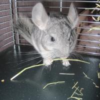 Photo de profil de Twingo