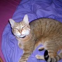 Photo de profil de Domino