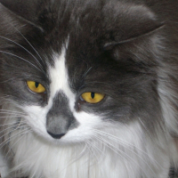 Photo de profil de Biscotte
