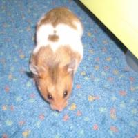 Photo de profil de Bulle