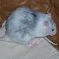 Photo de profil de Ohm