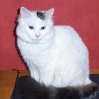 Photo de profil de Fripouille
