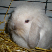 Photo de profil de Ralph