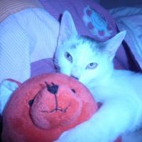 Photo de profil de Banania