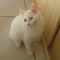 Photo de profil de Gasper