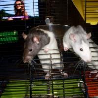 Photo de profil de Atchoum et rosalie