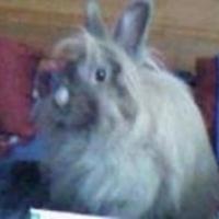 Photo de profil de Pichu