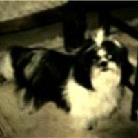 Photo de profil de Pollux