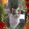 Photo de Maman chat