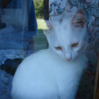 Photo de profil de Bobusia