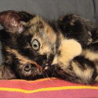 Photo de profil de Kali