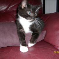 Photo de profil de Pastille