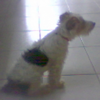 Photo de profil de Foxy