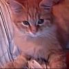 Photo de Garfield