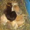 Photo de Bebes lapins