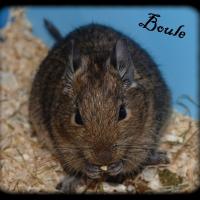 Photo de profil de Boule