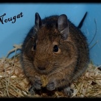 Photo de profil de Nougat