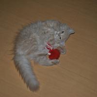 Photo de profil de Furry