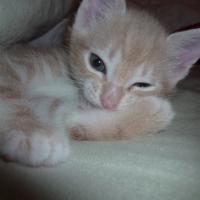 Photo de profil de Grunch