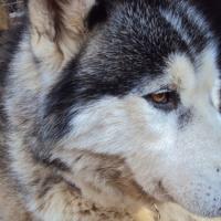 Photo de profil de Atlas