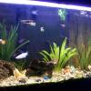 Photo de Aquarium