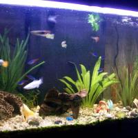 Photo de profil de Aquarium