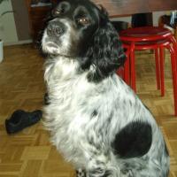 Photo de profil de Destey {chasseur de mouche}
