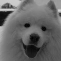 Photo de profil de Celtik